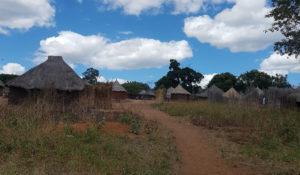 Zambia: Neither Feast Nor Famine