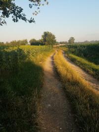 Lane in Tarn countryside.