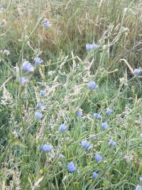 Wild flowers in the Tarn.